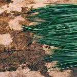 7 powodów dla których warto jeść natkę, szczypior i koperek