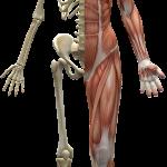 Gorset mięśniowy czyli co to takiego mięśnie głębokie